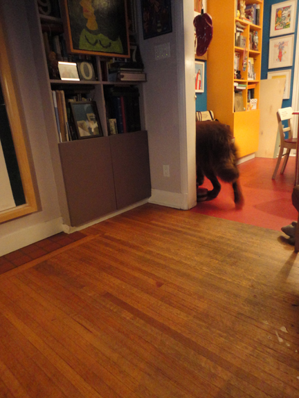 George June 23 following the cat