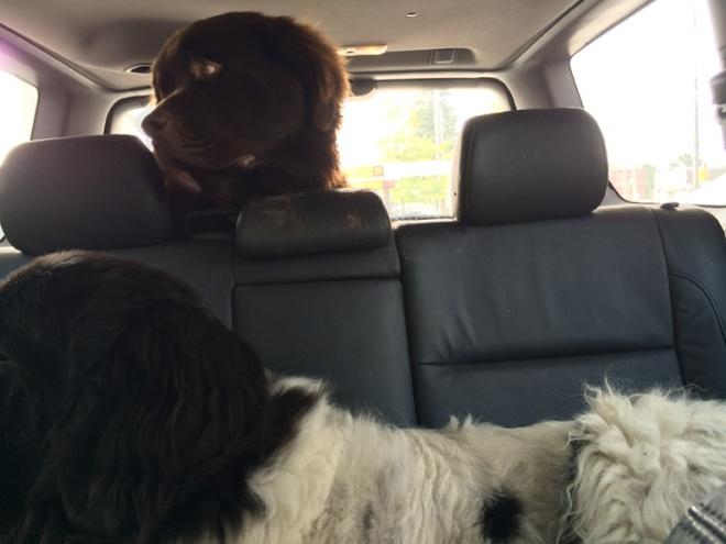 Geo and Mem in car