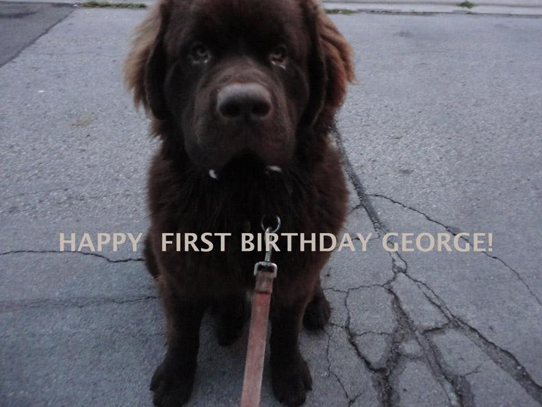GEORGE #1