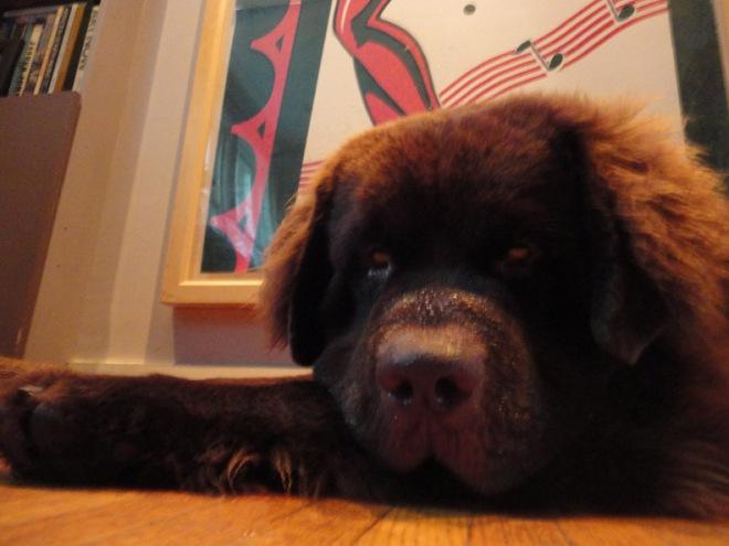 George on his 1st birthday Aug 5 2014
