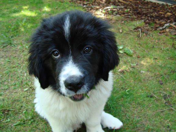 The mischievous pup
