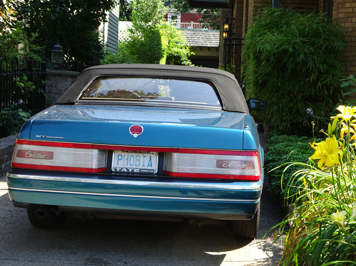 Buffalo Classic Car Phobia by the side garden