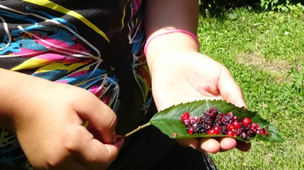 Freshly picked by these hands on a July Sunday morning in the Prospect Community Garden 2015