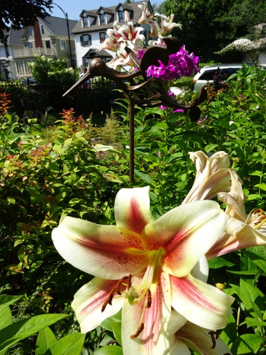 Hummingbird and Lilies Victorian Garden West Delavan Buffalo