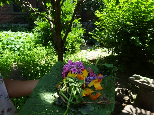 Pickings by children playing in the Prospect Community Garden July 2015 Buffalo