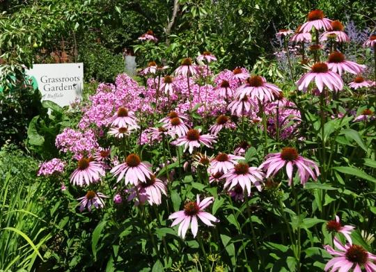 Prospect Community Garden in Buffalo - July 2015 for more info visit http://www.grassrootsgardens.org/lower-west-side-gardens.html
