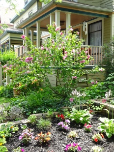 Spacious plantings Buffalo front garden July 25 2015