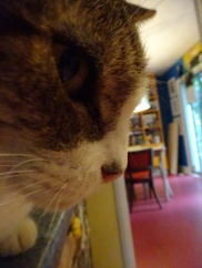 Wonder Cat face July