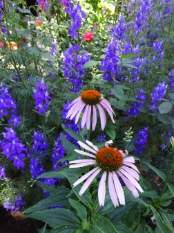 Larkspur and Coneflowers