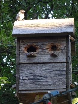 Sparrow House3