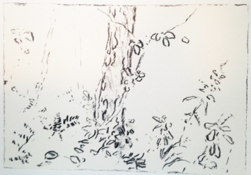 forest6