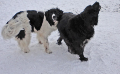 Memphis in her younger days with her old pal Elllie Mae