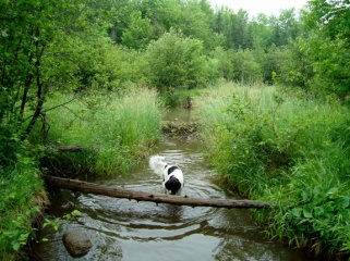 splashing around a trout stream