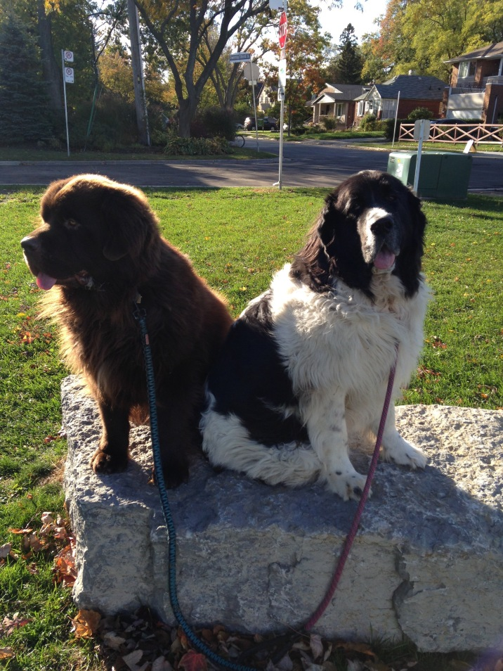 Memphis on the right with her buddy George