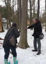 Looking at a Bur Oak