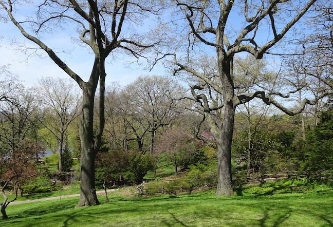 black oak white oak.jpg