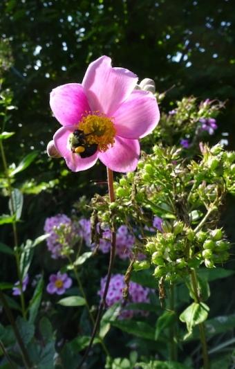 Bee bonanza
