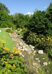 Whistling Gardens with Ligularia Dentata Desdemona