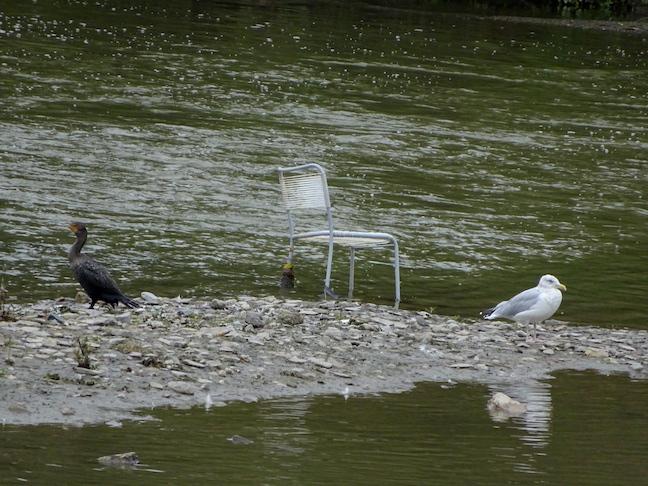 2 birds 1 chair.jpg