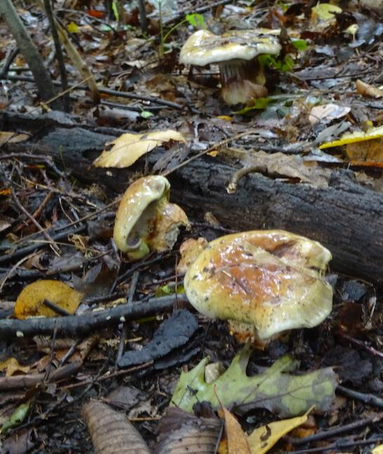 slimy mushrooms.jpg